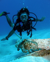 diver and octopus - scuba diving st maarten